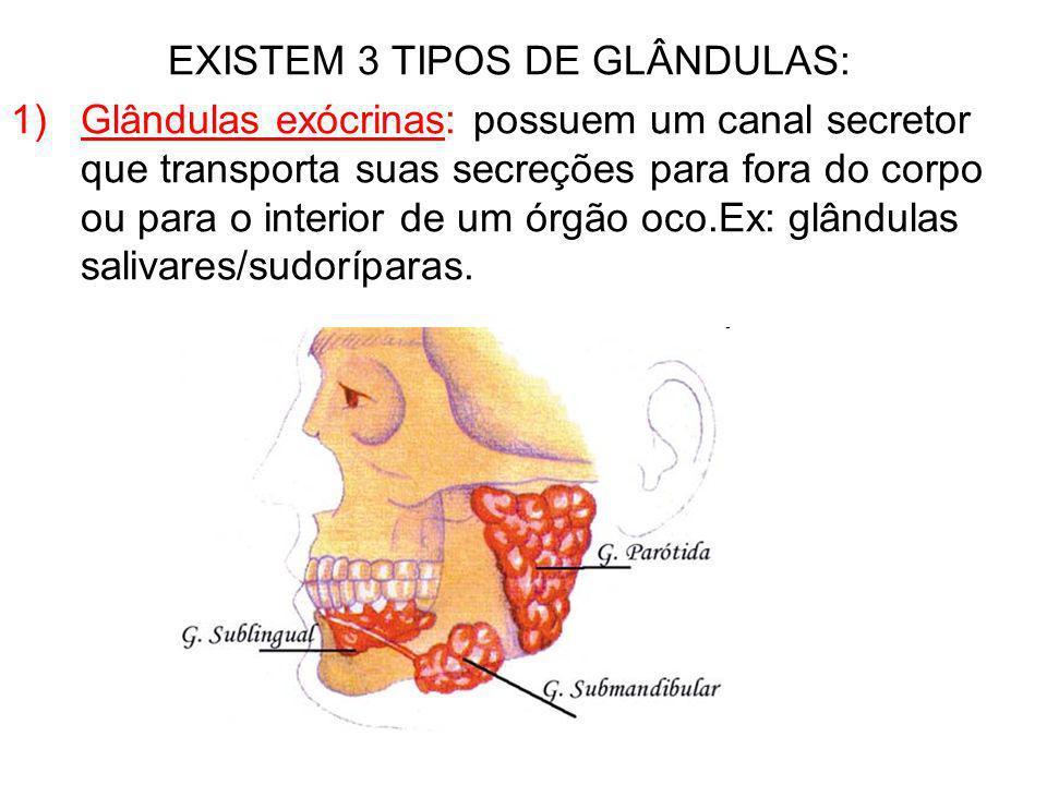 EXISTEM 3 TIPOS DE GLÂNDULAS: