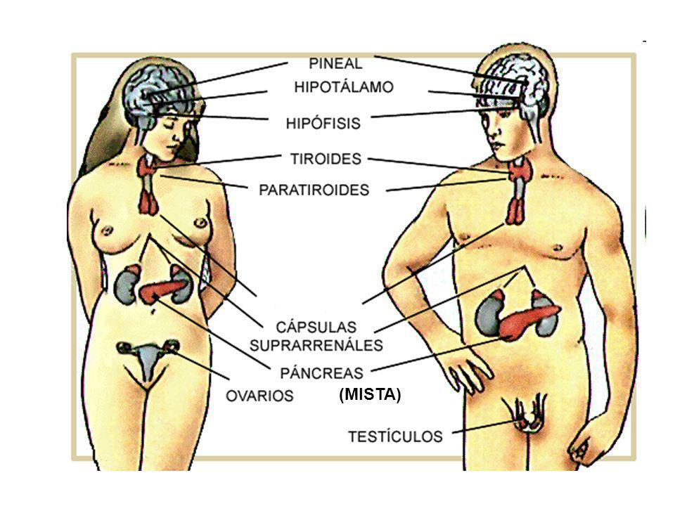 Perfecto Sistema Hepatobiliar Anatomía Y Fisiología Colección ...