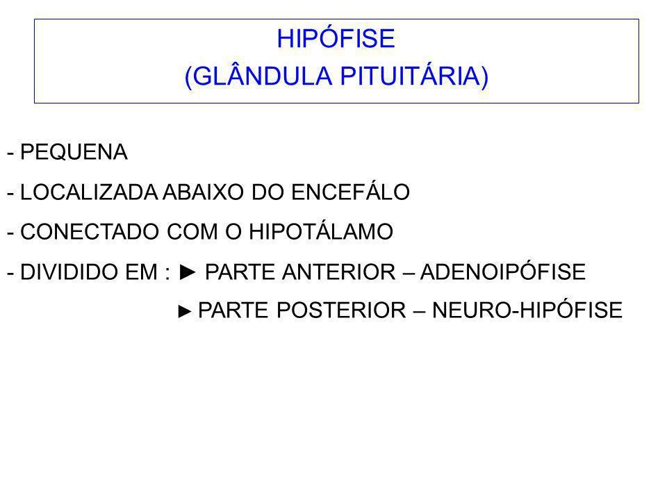 HIPÓFISE (GLÂNDULA PITUITÁRIA)