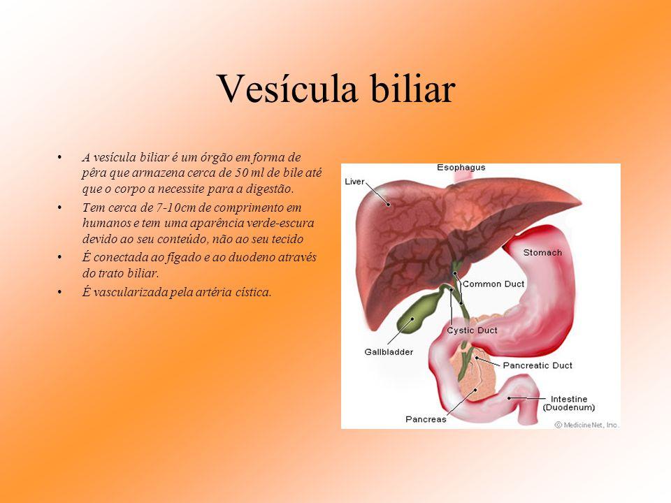 Vesícula biliar A vesícula biliar é um órgão em forma de pêra que armazena cerca de 50 ml de bile até que o corpo a necessite para a digestão.