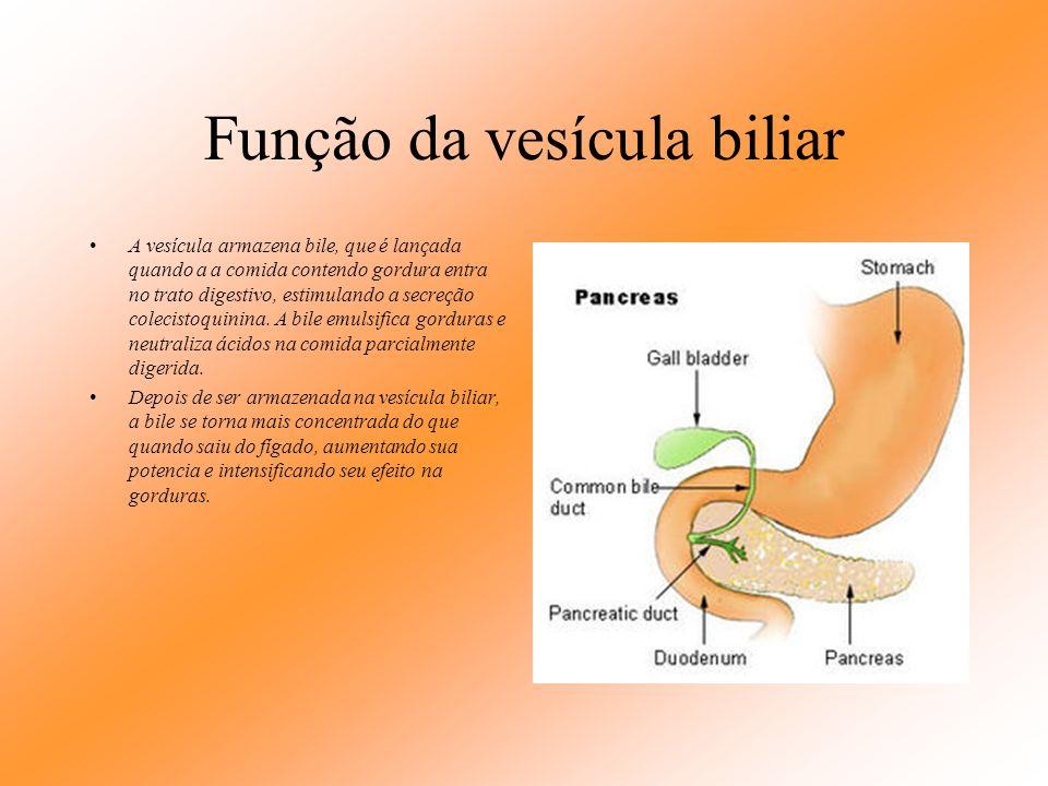 Função da vesícula biliar