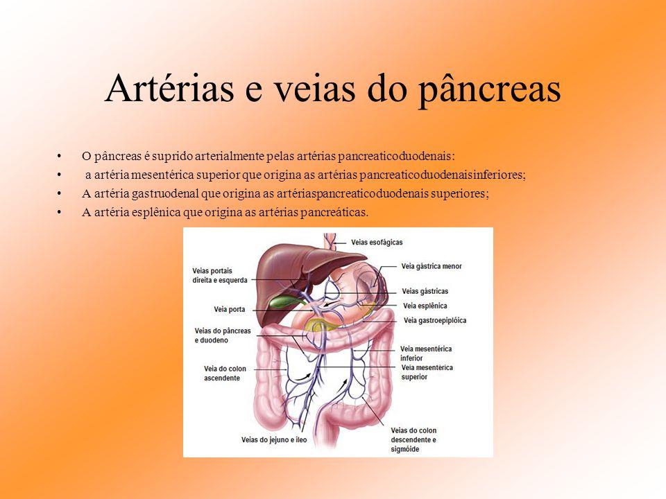 Artérias e veias do pâncreas