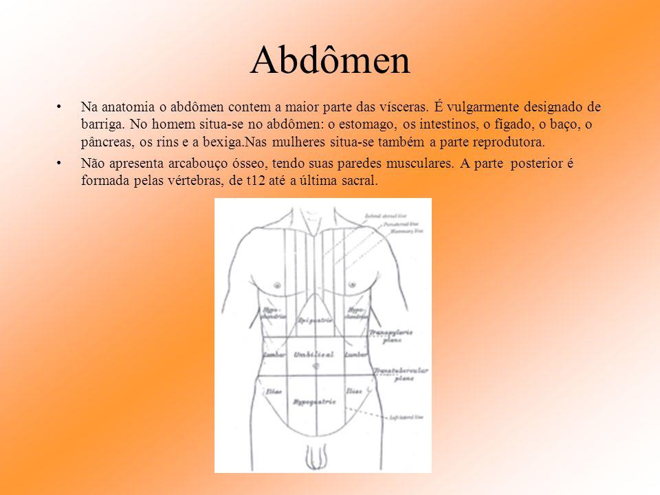 Abdômen