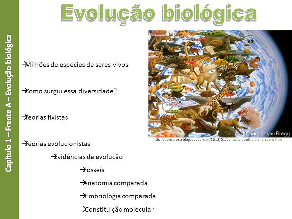 Capítulo 1 – Frente A – Evolução biológica