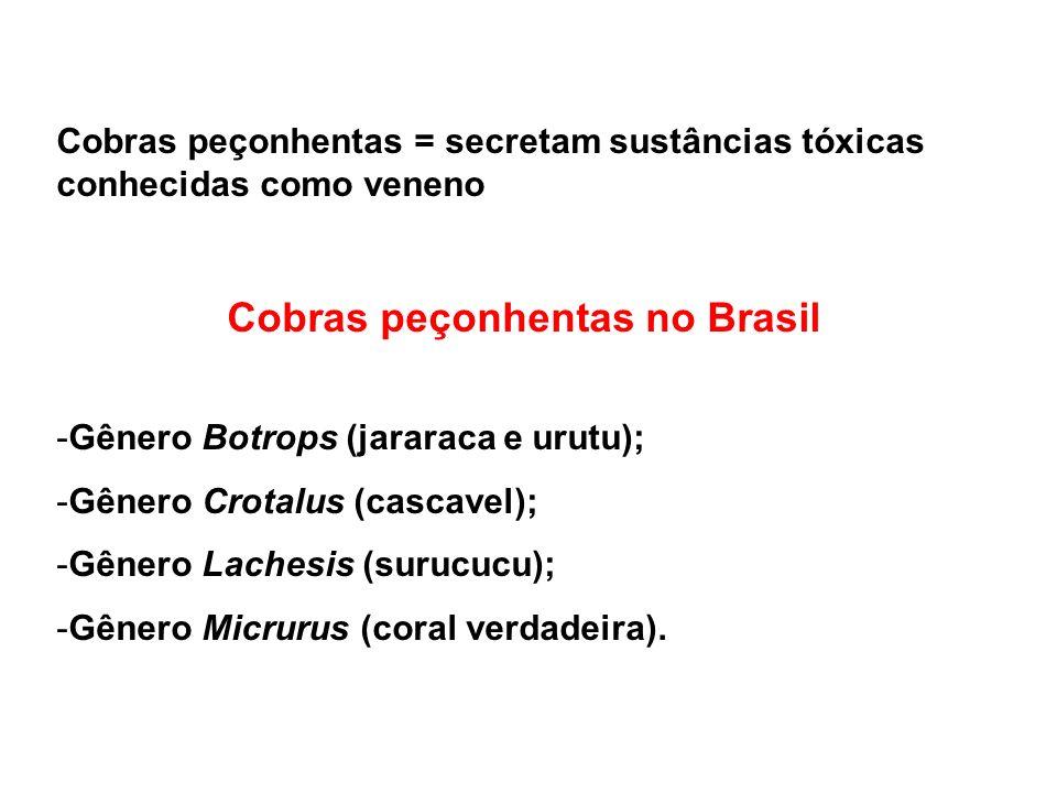 Cobras peçonhentas no Brasil