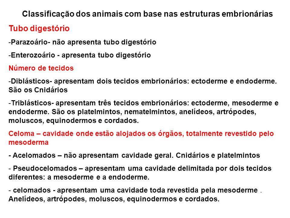 Classificação dos animais com base nas estruturas embrionárias