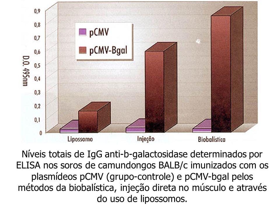 Níveis totais de IgG anti-b-galactosidase determinados por ELISA nos soros de camundongos BALB/c imunizados com os plasmídeos pCMV (grupo-controle) e pCMV-bgal pelos métodos da biobalística, injeção direta no músculo e através do uso de lipossomos.