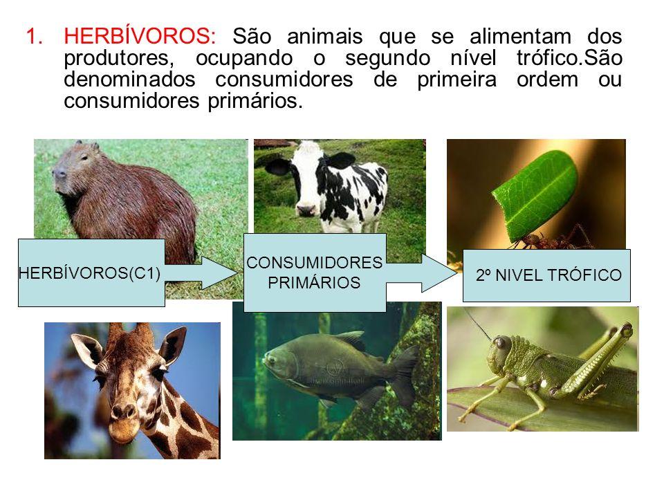 HERBÍVOROS: São animais que se alimentam dos produtores, ocupando o segundo nível trófico.São denominados consumidores de primeira ordem ou consumidores primários.