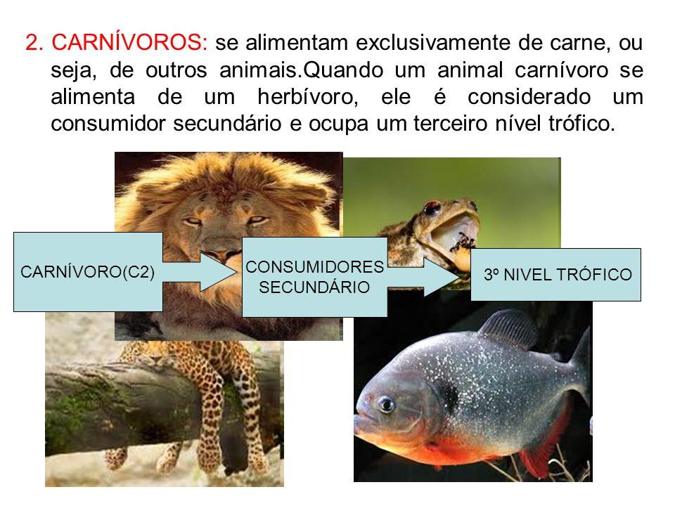2. CARNÍVOROS: se alimentam exclusivamente de carne, ou seja, de outros animais.Quando um animal carnívoro se alimenta de um herbívoro, ele é considerado um consumidor secundário e ocupa um terceiro nível trófico.