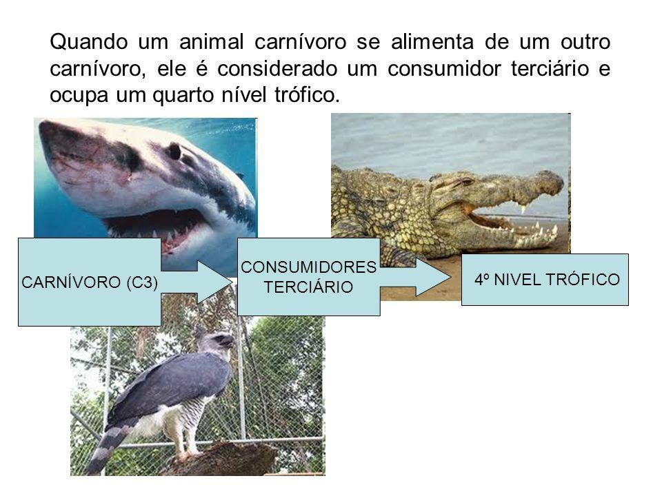 Quando um animal carnívoro se alimenta de um outro carnívoro, ele é considerado um consumidor terciário e ocupa um quarto nível trófico.