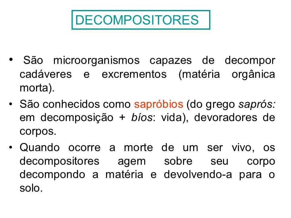 DECOMPOSITORES São microorganismos capazes de decompor cadáveres e excrementos (matéria orgânica morta).