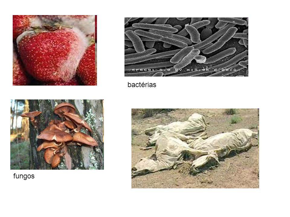 bactérias fungos