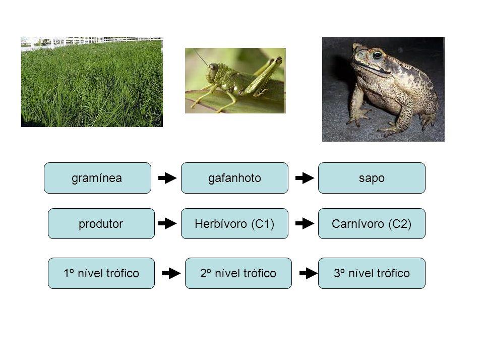 gramínea gafanhoto. sapo. produtor. Herbívoro (C1) Carnívoro (C2) 1º nível trófico. 2º nível trófico.