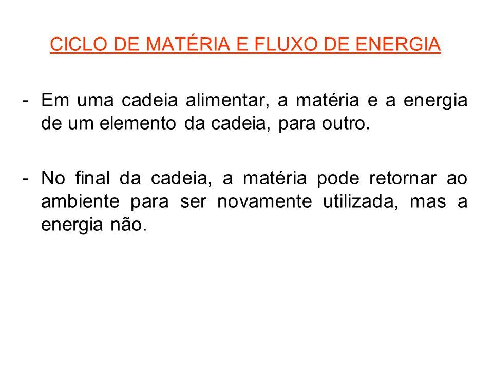 CICLO DE MATÉRIA E FLUXO DE ENERGIA