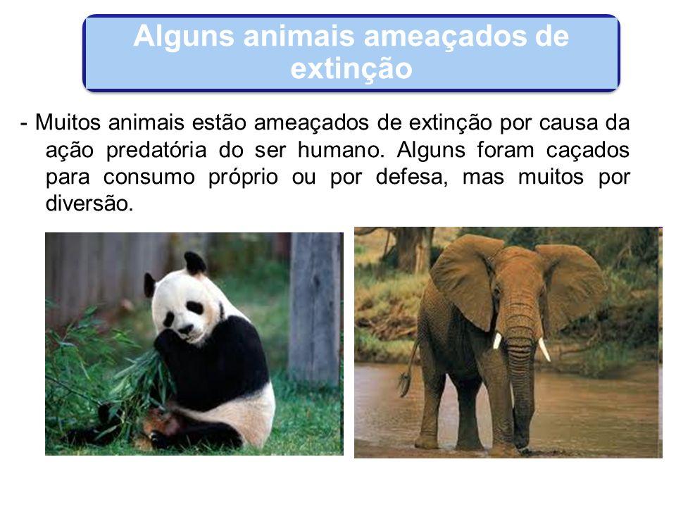 Alguns animais ameaçados de extinção