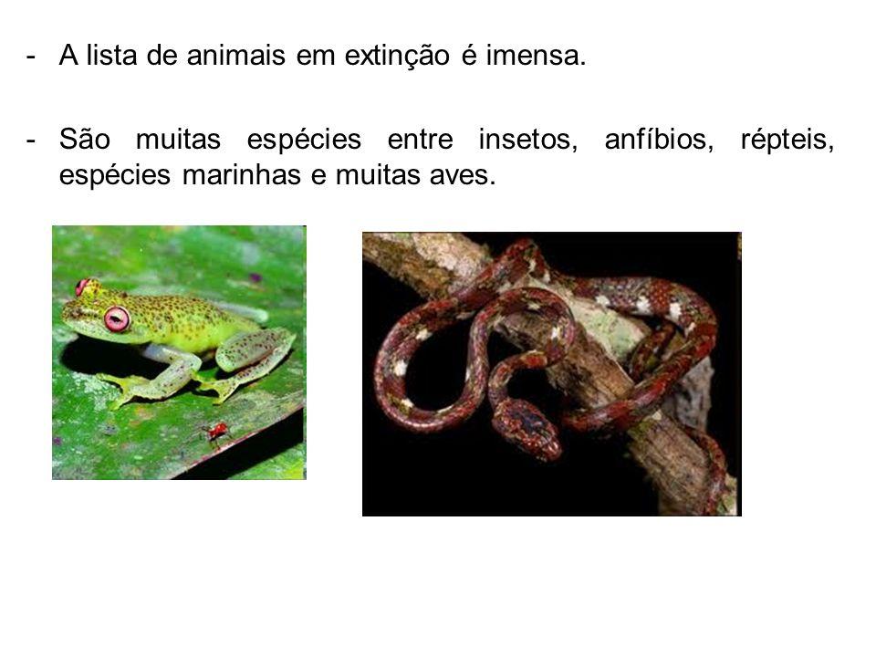 A lista de animais em extinção é imensa.