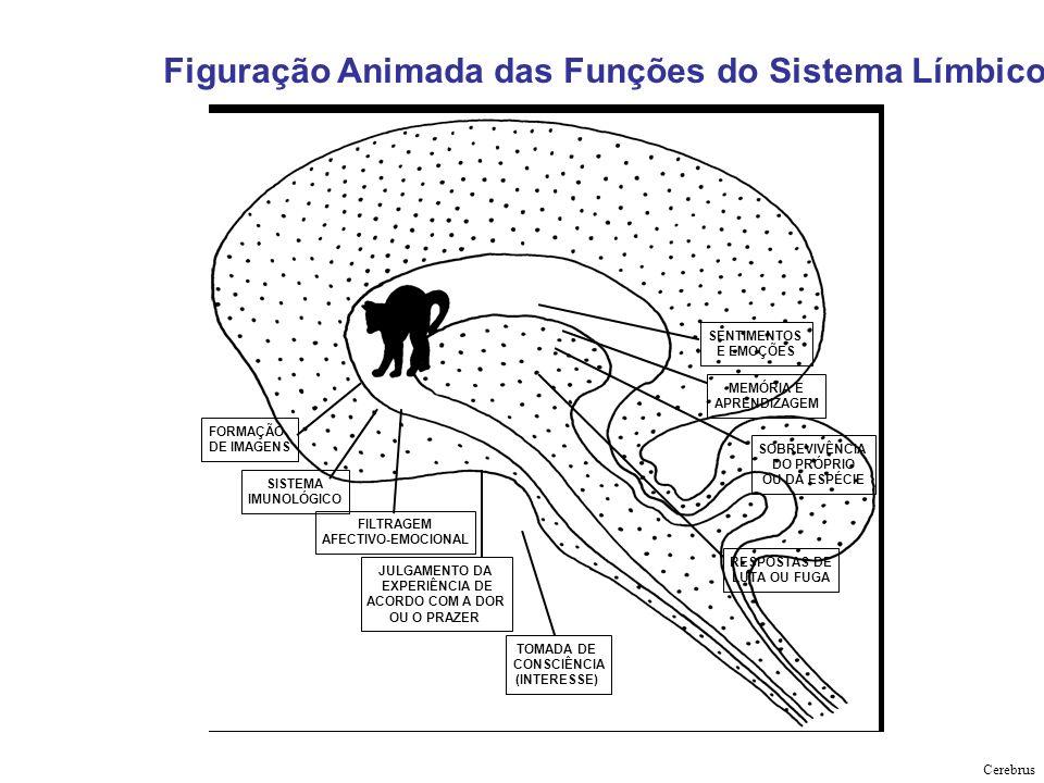 Figuração Animada das Funções do Sistema Límbico