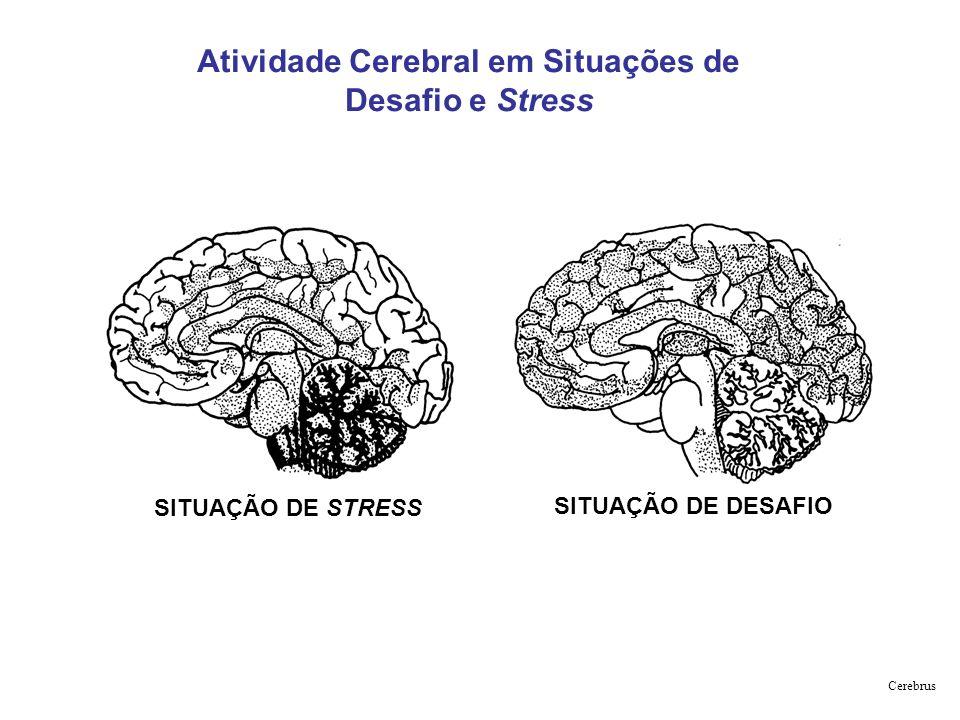 Atividade Cerebral em Situações de