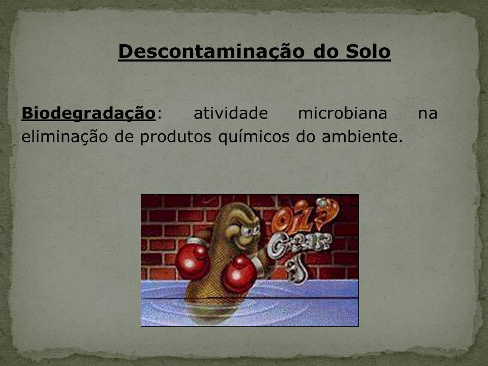 Descontaminação do Solo