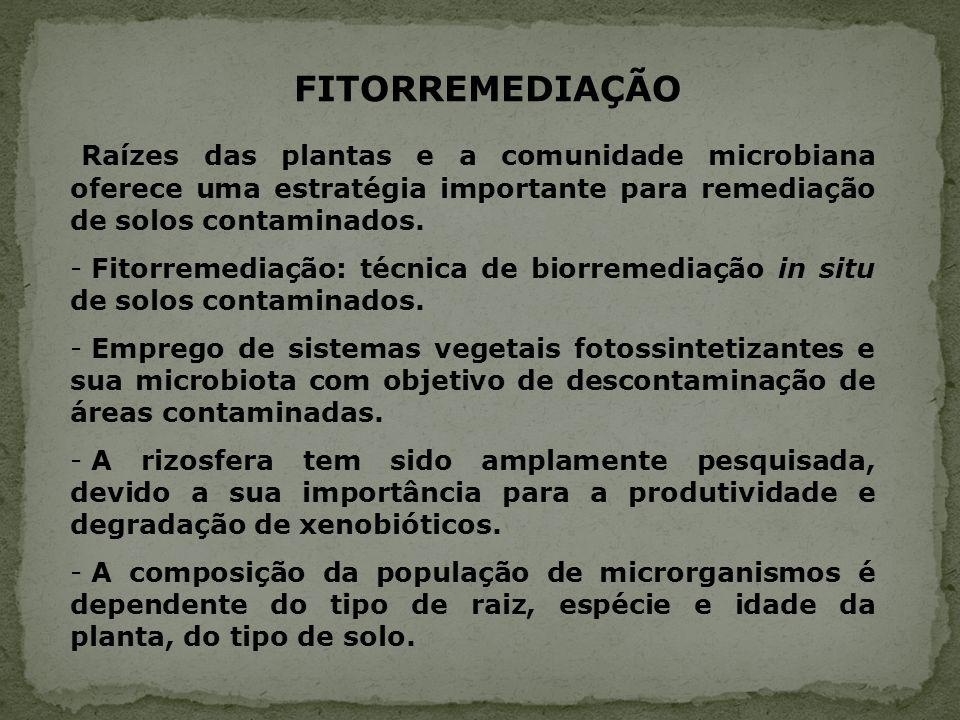 FITORREMEDIAÇÃO Raízes das plantas e a comunidade microbiana oferece uma estratégia importante para remediação de solos contaminados.