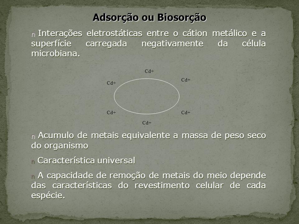 Adsorção ou Biosorção Interações eletrostáticas entre o cátion metálico e a superfície carregada negativamente da célula microbiana.