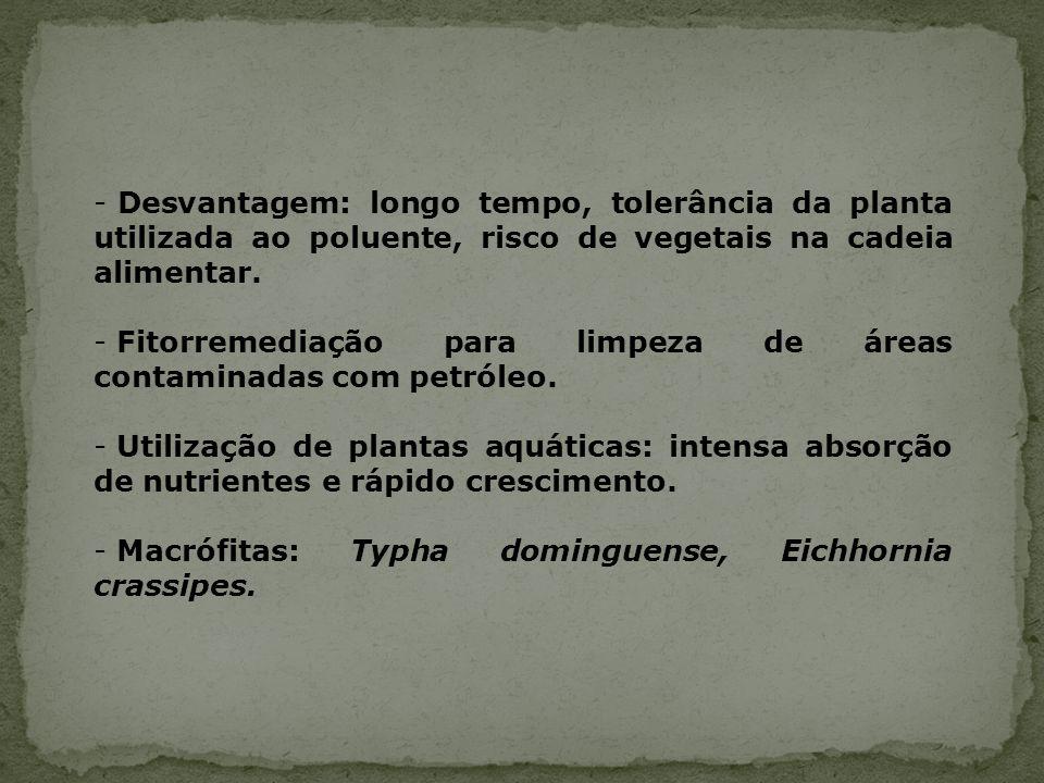 Desvantagem: longo tempo, tolerância da planta utilizada ao poluente, risco de vegetais na cadeia alimentar.