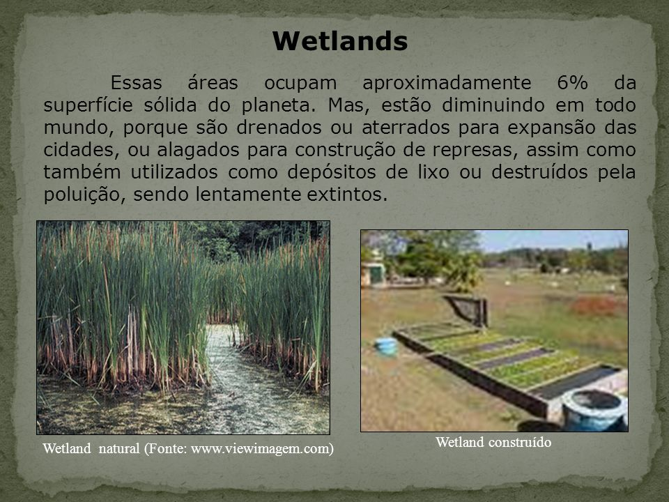Wetland natural (Fonte: www.viewimagem.com)