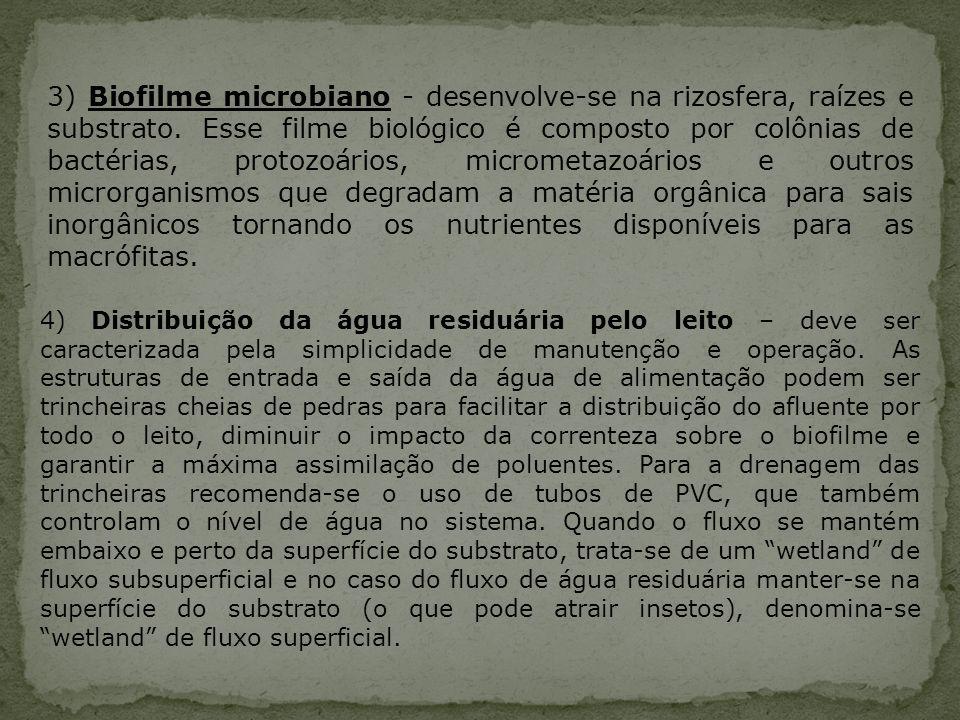 3) Biofilme microbiano - desenvolve-se na rizosfera, raízes e substrato. Esse filme biológico é composto por colônias de bactérias, protozoários, micrometazoários e outros microrganismos que degradam a matéria orgânica para sais inorgânicos tornando os nutrientes disponíveis para as macrófitas.