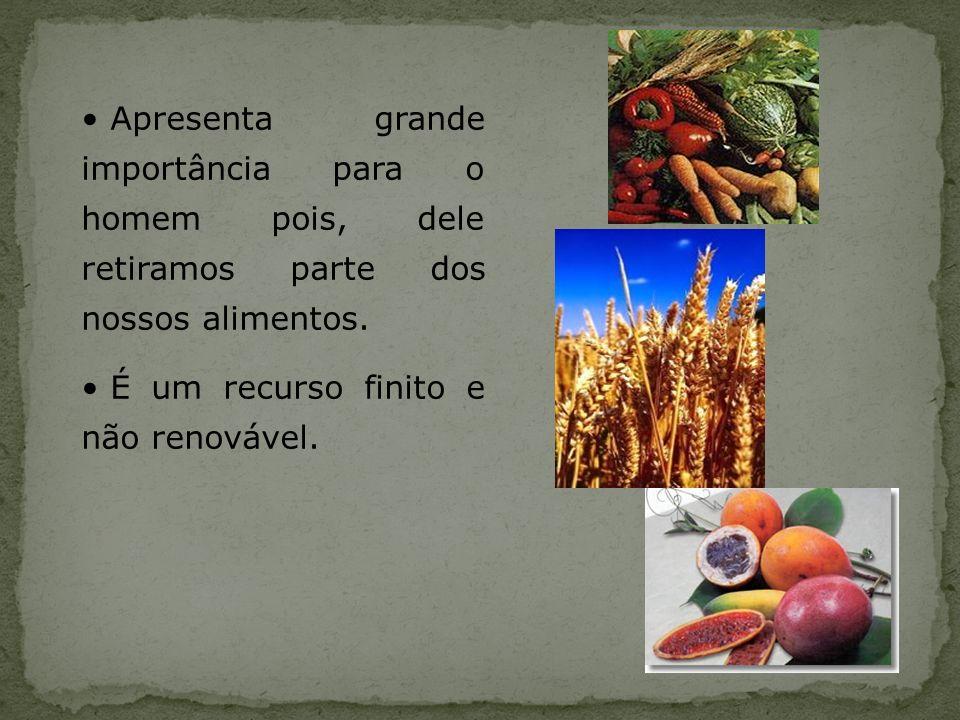 Apresenta grande importância para o homem pois, dele retiramos parte dos nossos alimentos.