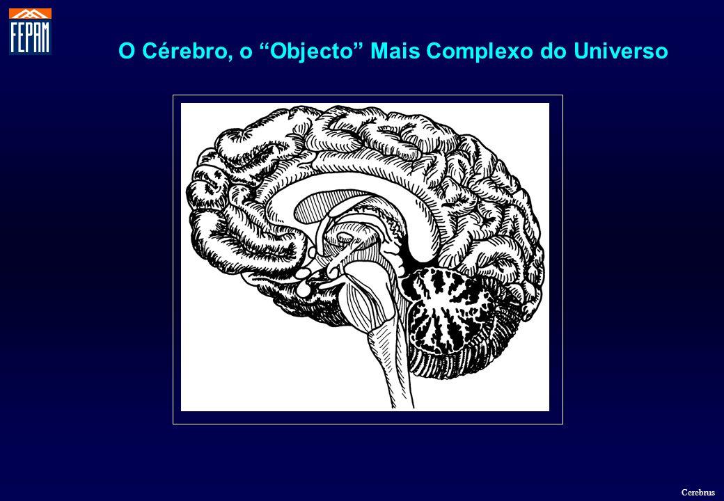 O Cérebro, o Objecto Mais Complexo do Universo
