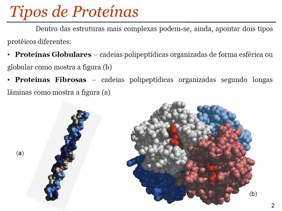 Tipos de Proteínas Dentro das estruturas mais complexas podem-se, ainda, apontar dois tipos protéicos diferentes: