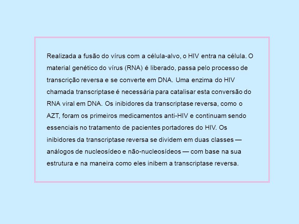 Realizada a fusão do vírus com a célula-alvo, o HIV entra na célula