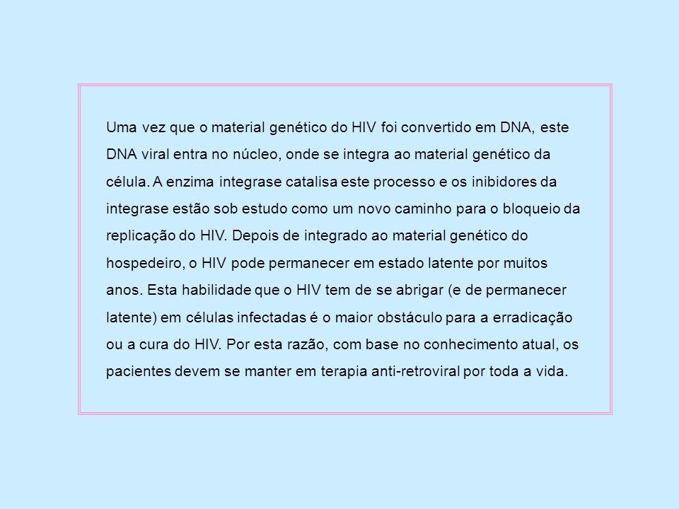 Uma vez que o material genético do HIV foi convertido em DNA, este DNA viral entra no núcleo, onde se integra ao material genético da célula.