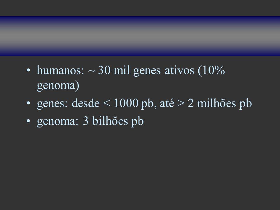 humanos: ~ 30 mil genes ativos (10% genoma)