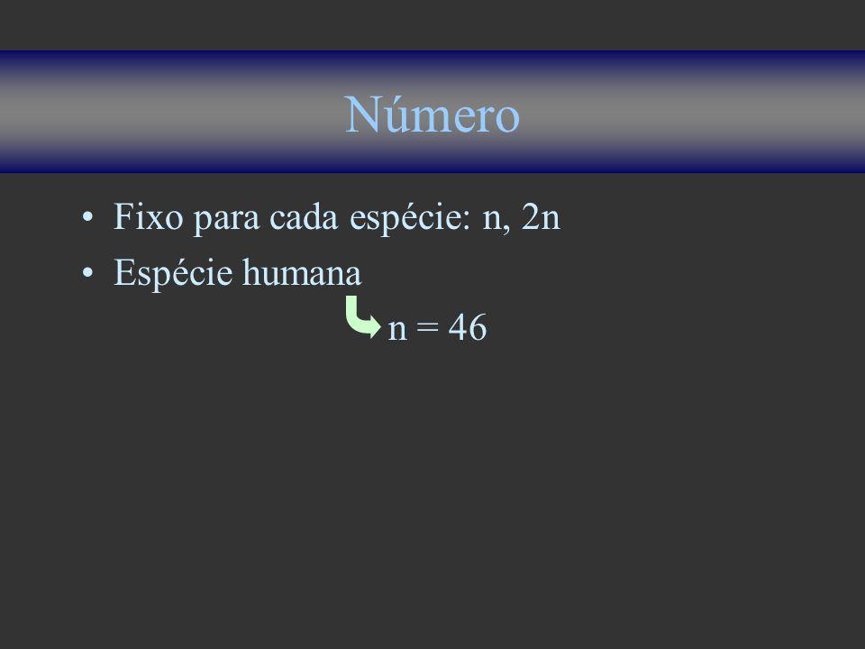 Número Fixo para cada espécie: n, 2n Espécie humana n = 46