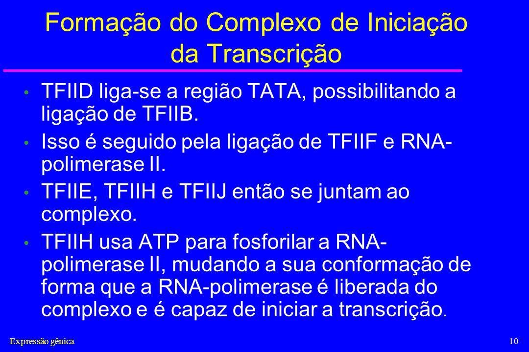 Formação do Complexo de Iniciação da Transcrição