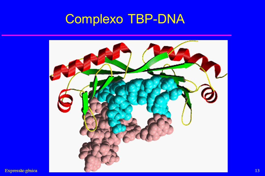 Complexo TBP-DNA