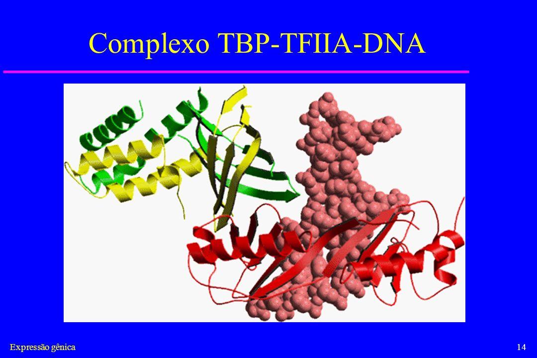 Complexo TBP-TFIIA-DNA