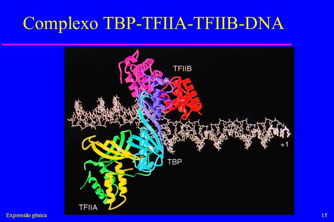 Complexo TBP-TFIIA-TFIIB-DNA