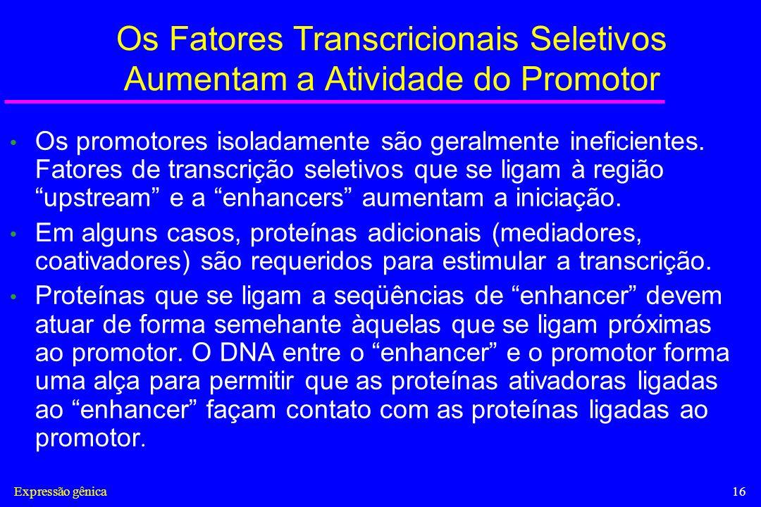 Os Fatores Transcricionais Seletivos Aumentam a Atividade do Promotor