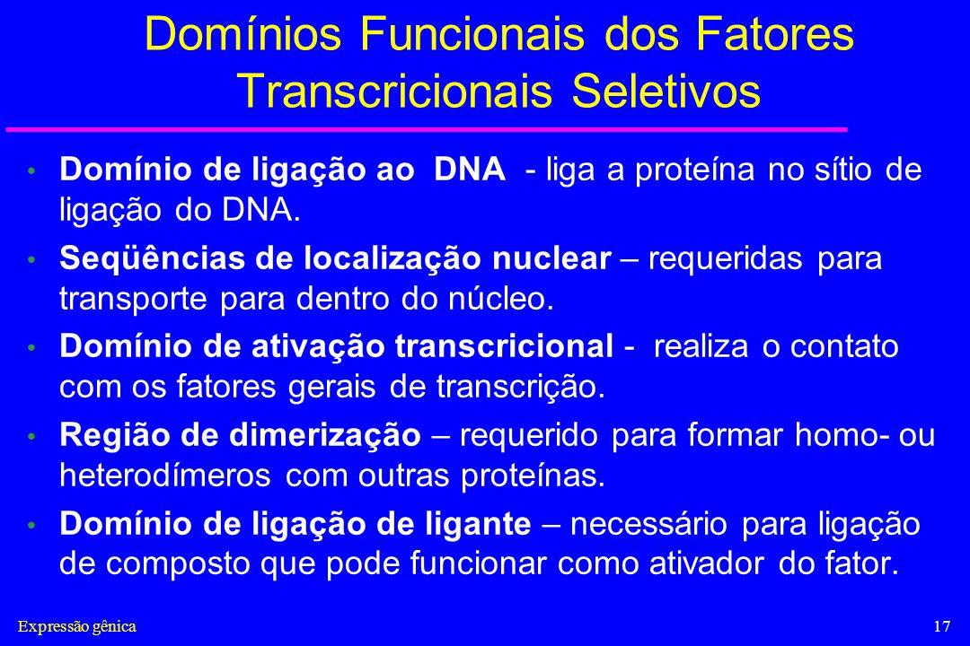 Domínios Funcionais dos Fatores Transcricionais Seletivos