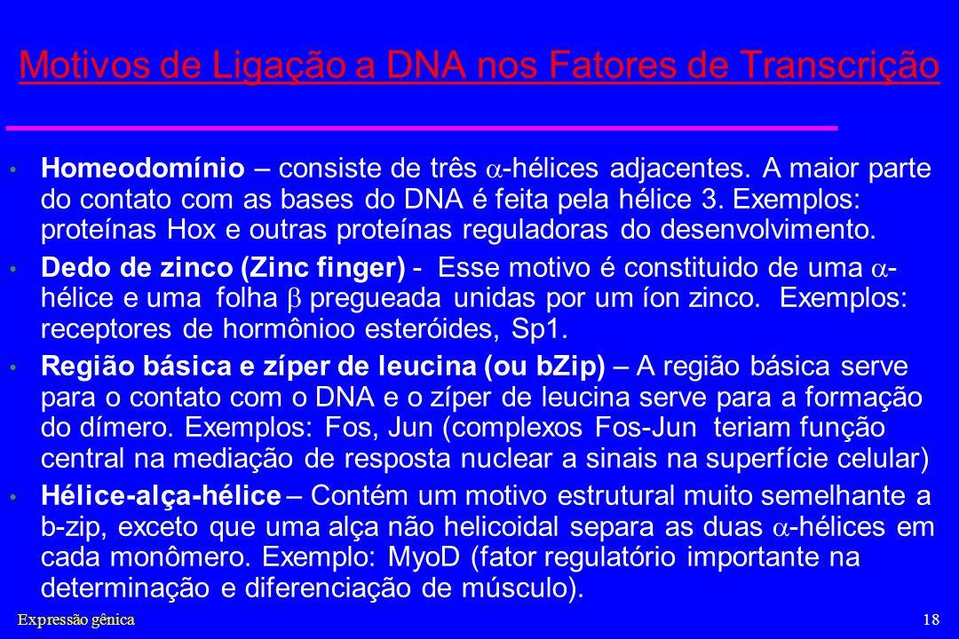 Motivos de Ligação a DNA nos Fatores de Transcrição