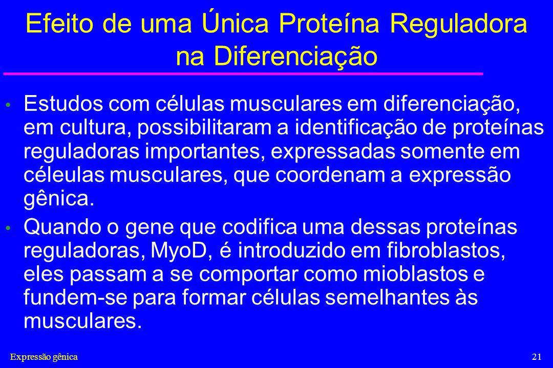 Efeito de uma Única Proteína Reguladora na Diferenciação