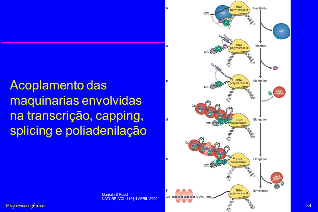 Acoplamento das maquinarias envolvidas na transcrição, capping, splicing e poliadenilação