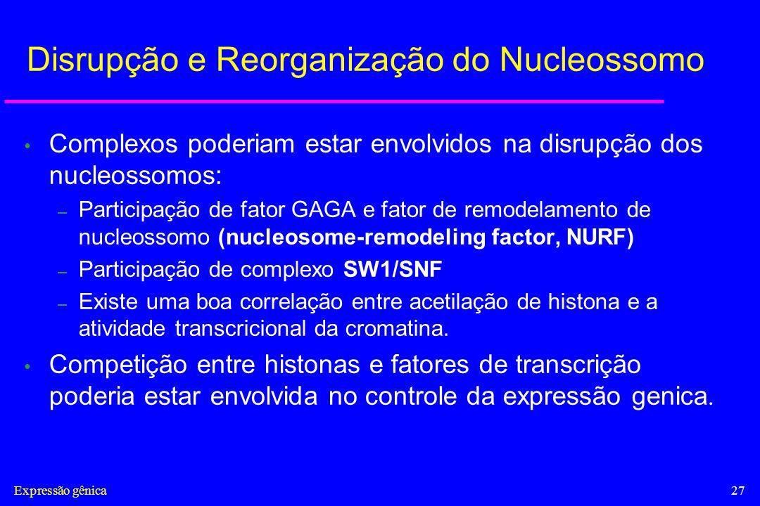 Disrupção e Reorganização do Nucleossomo