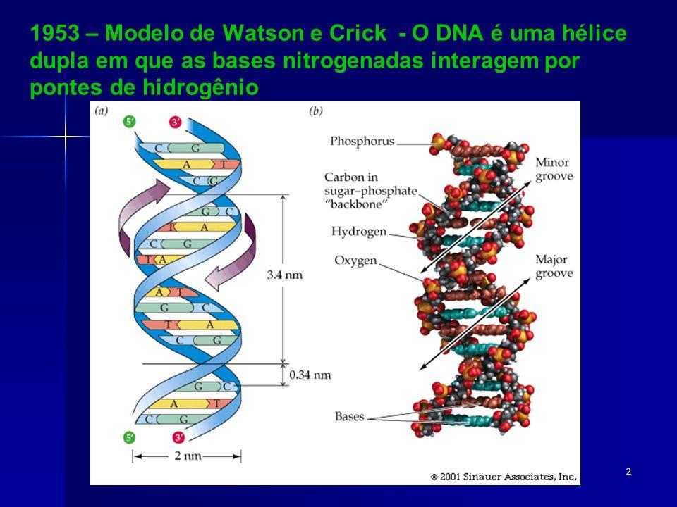 1953 – Modelo de Watson e Crick - O DNA é uma hélice