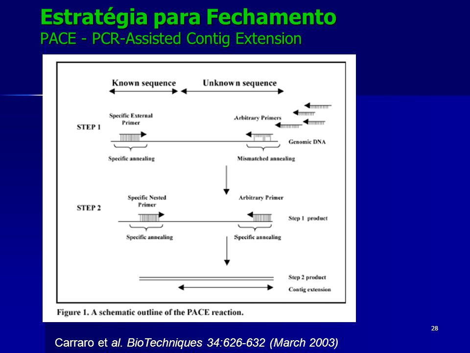Estratégia para Fechamento PACE - PCR-Assisted Contig Extension