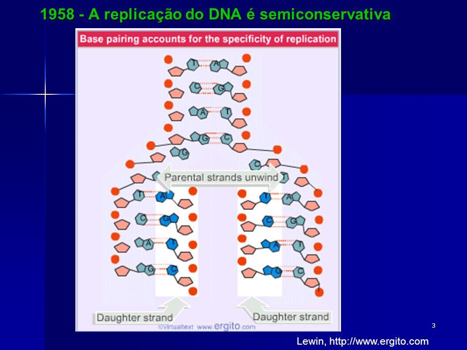 1958 - A replicação do DNA é semiconservativa