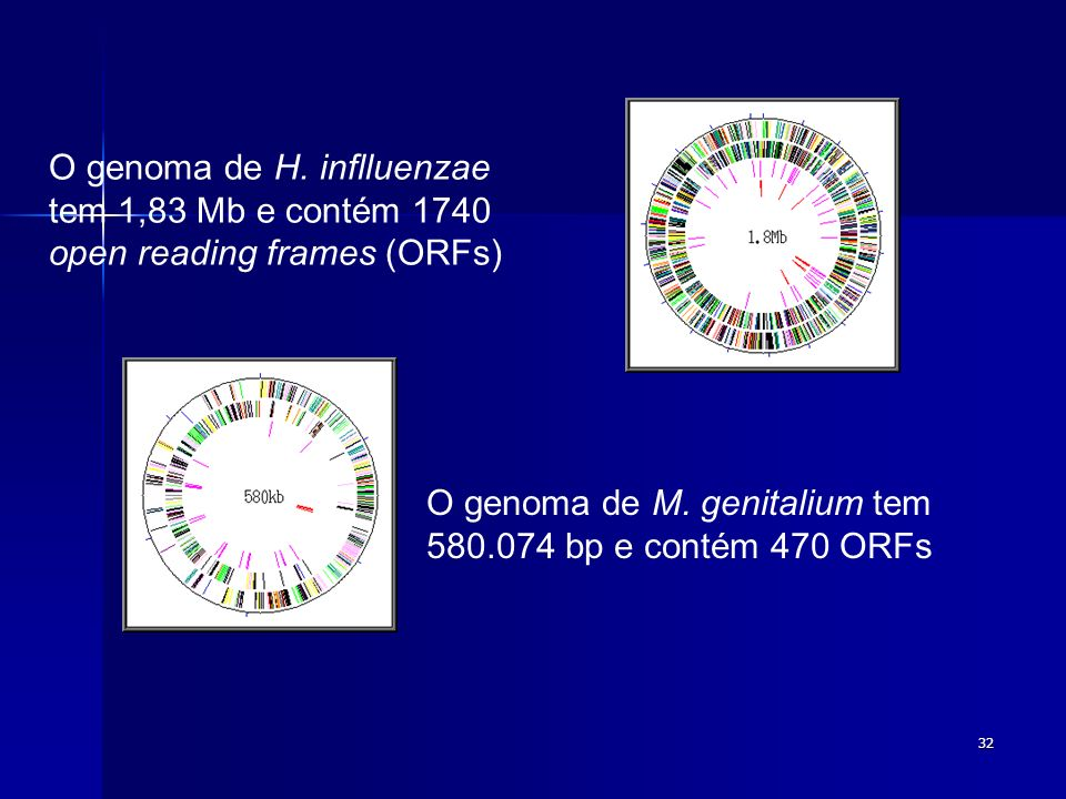 O genoma de H. inflluenzae tem 1,83 Mb e contém 1740 open reading frames (ORFs)