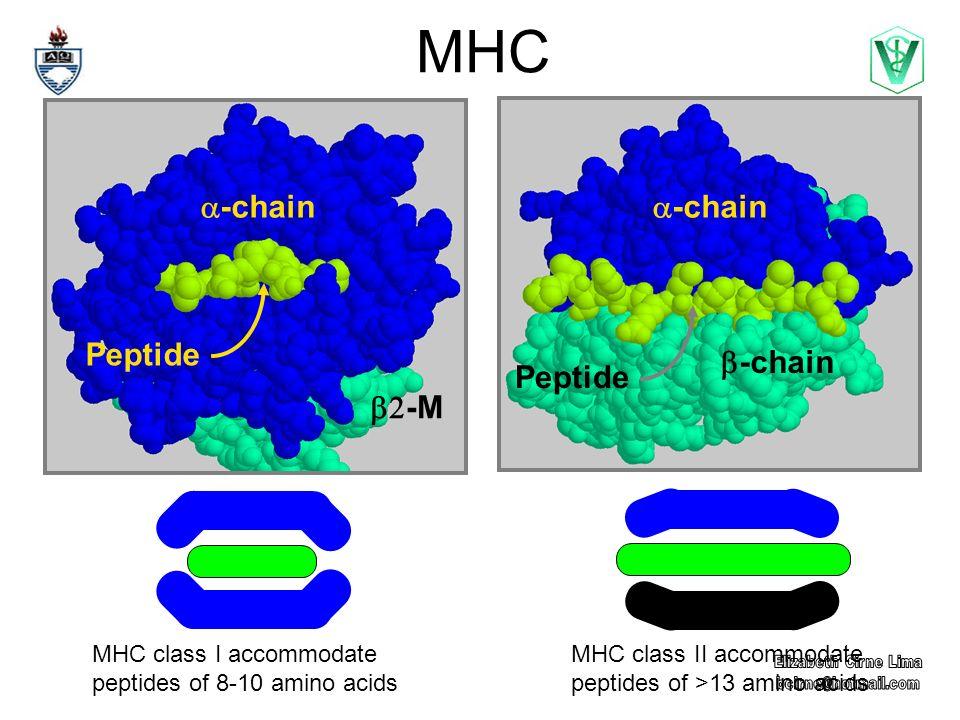 MHC b2-M a-chain Peptide a-chain b-chain Peptide